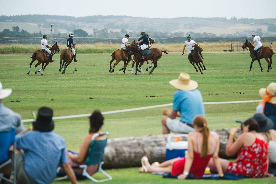 mysterious-death-of-16-polo-horses-travelling-from-tasmania 1 polomagazine