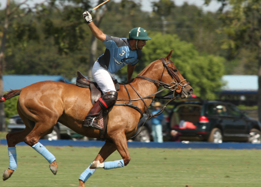polo photography alex pacecho polo magazinepolo team polo club polo tournament